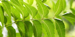 Go to the outbreak of Foot and Neem