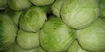 Cabbage repellent ulcers