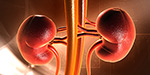 Health Kidney Function