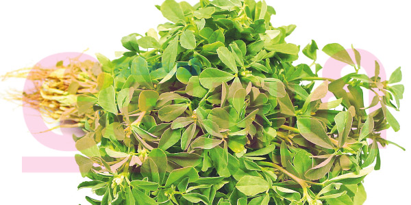 Spinach The Great: venthayakeerai