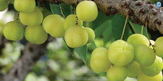 Gooseberry to heal white color