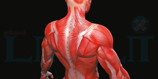 Muscles and disturbances