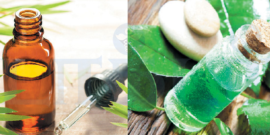 Tea Tree Oil ... Do you know the application?