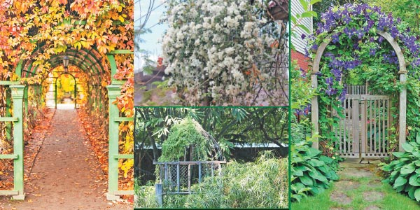 Large garden to make your house a canopy!