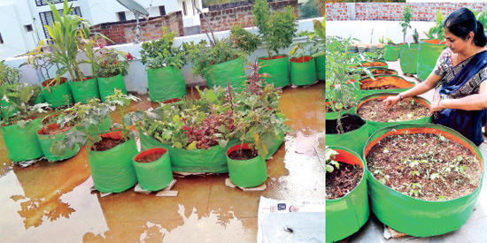 Garden can be set up
