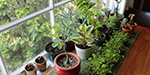 The need to develop a plant to house alakucerkka