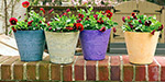 Adding to the beauty of the house ornamental plants