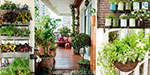 Plants that help keep the house cool