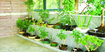 Some wonderful herbs to grow at home!