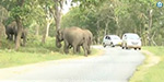Leaving the death agony of forest elephants