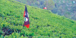 The AIADMK trying to occupy the panchayat tea estate that was recovered in Belgaum: party flags