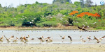Ucutteri short changed: foreign birds will die miserable, ignored Forests