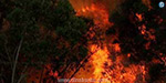 Uttarakhand forest fire was under control: Ministers Information