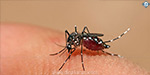Dengue fever in Ambature, Avadi, 4 dead