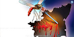 In 8 months, one is a victim Dengue Damage in Tamil Nadu Three times the increase