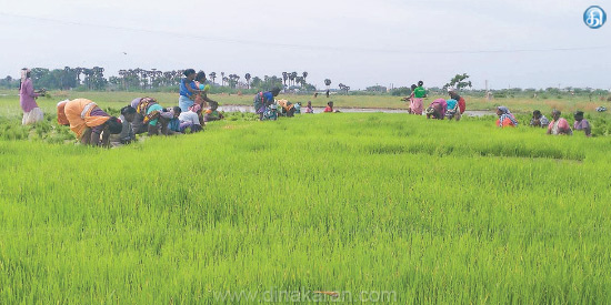 15 years after the flood of the great eye the agrarian work intensified