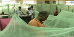 Dengue threatened: 18 days 161 killed