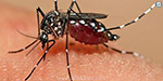 Dengue symptom for 10 admit college students People in the North China panic