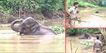 The elephant in Assam in search of drinking water for 5 days stuck in the mud, who suffered the awful