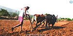 For poor farmers, 'Agriculture Bakhya' project - a reaching law Fruit