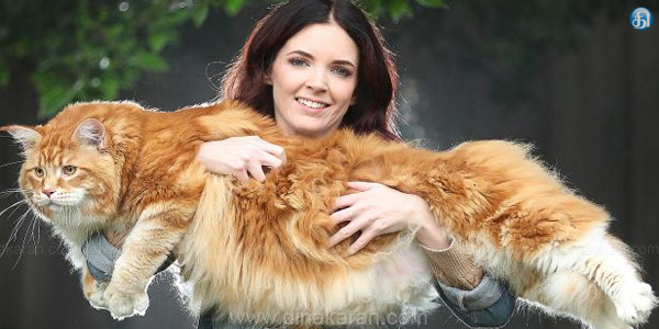 Melbourne City Cat in Guinness Book of Records