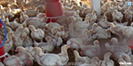 The villagers demand to close the poultry farm