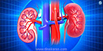 Kidney activity varies with blood pressure change