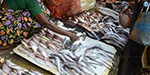 Fish Market Market Affair The Government of Tamil Nadu must take immediate action