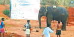 The elephant that defended the fiery tiger