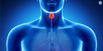 Thyroid glands that balance body weight