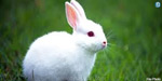 Near palani forest rabbit hunting : will forest department take action?