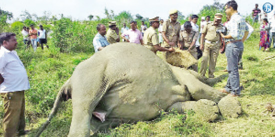 Pranabharam near Krishnagiri: Death of a girl elephant