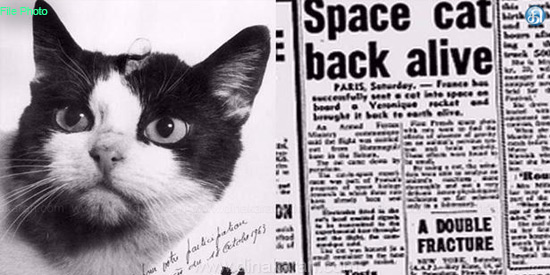 World's first space cat to be honoured with statue in France