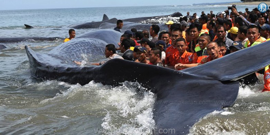 The people in the sea were shattered by the sea shore whales