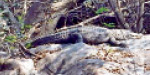 Forests in the riverbank river: Forestry warning to the public to be safe