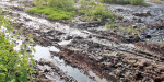 Stagnant water in the farms of Thirumani Nilayur: the grass is also unbearable