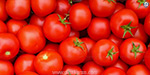 Tomatoes fall by Rs 15 per kg