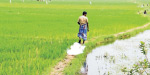 Fresh grass scene: Peasants are concerned about the poor