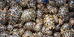 Rs. 40 lakh worth of star turtles seized in Chennai airport
