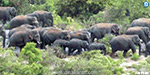 70 elephants camped in the circular area nokanur Chase to the forest