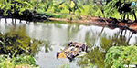 Near Thiruthuraipandi Chennai pilgrims car Blew into the pond