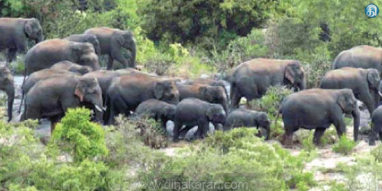 The 25 elephants that came to Dhenkanikottai were chopped down to the forest