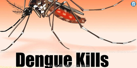 Dengue fever has killed 302 people in 53 days