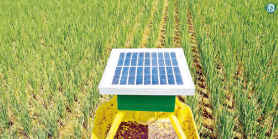 Solar pest control in paddy fields is reduced