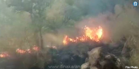 Indian Forest Research Institute warns of wild fires: TN forest officials killed by negligence
