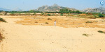 Sand blocked in Andhra Pradesh: sand theft in the Kosstadai river