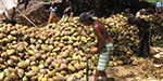 Coconut oil price up to Rs 52,000
