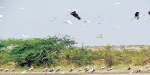 The water from the Kodiyakkarai Sanctuary is the season of foreign birds departing before the season can