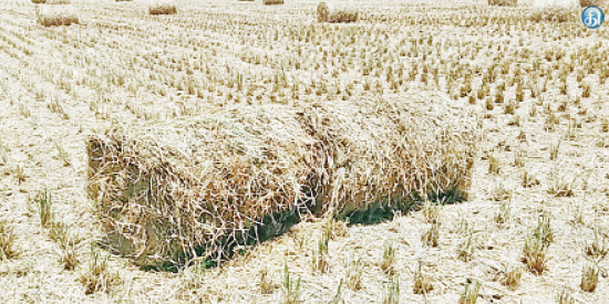Hay for sale to Rs 40: farmers worry about price decline