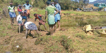 People started to work at the Mannanur village for the purpose of drinking water near Kodaikanal